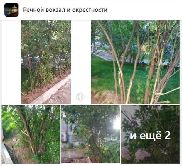На Ленинградке из-за установки бордюров пострадала сирень