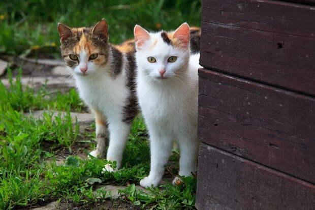 Пенсионерка пошла в аптеку за чем-нибудь от нервов — а вернулась с двумя котятами. Но они оказались полезнее