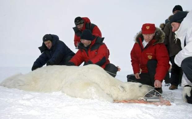Путин и белый медведь