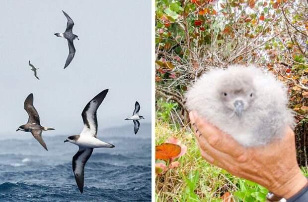 19 неожиданных новостей, которыми нас порадовала природа