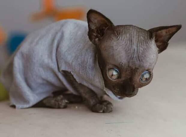 Котёнок сфинкс раскрыл мне глаза на то, что дружбы не существует.