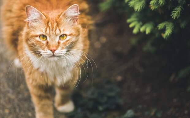 Рыжий кот! История со счастливым концом