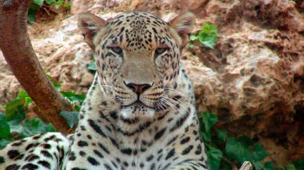 В России могут исчезнуть 13 видов животных