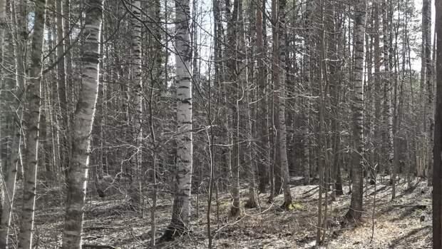 Омский министр здравоохранения Мураховский пропал во время охоты