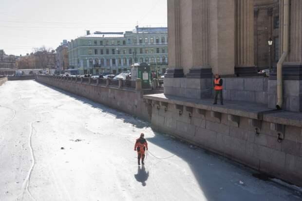 Волонтеры-спасатели Петербурга спасли селезня со сломанным крылом