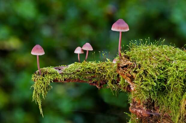 В лес по грибы, на дачу – по ягоды: топ-5 блогов для грибников и садоводов Удмуртии