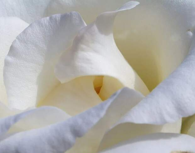 """Благотворительная акция """"Белый цветок"""" стартует в Симферополе 19 сентября"""