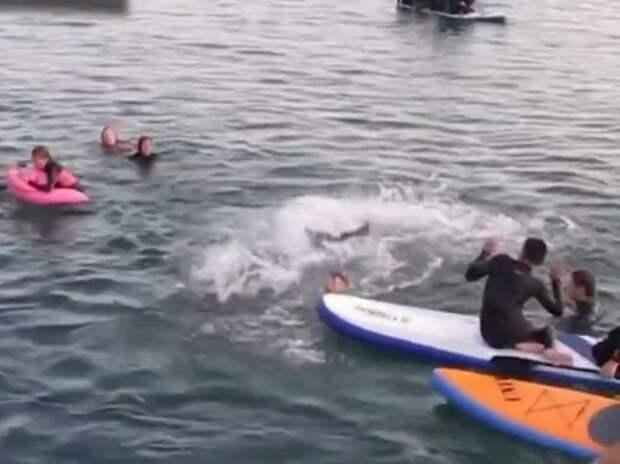 Дельфин умер из-за того, что был слишком дружелюбным