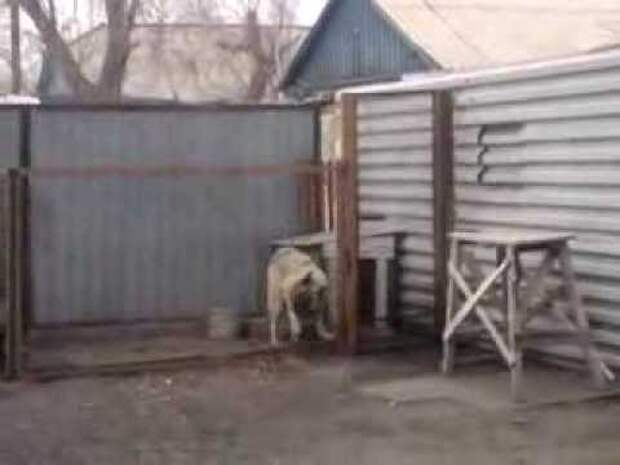 Умопомрачительные танцы этой собаки покорили Сеть