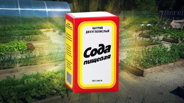 Агроном предупредила о последствиях применения соды на дачном участке
