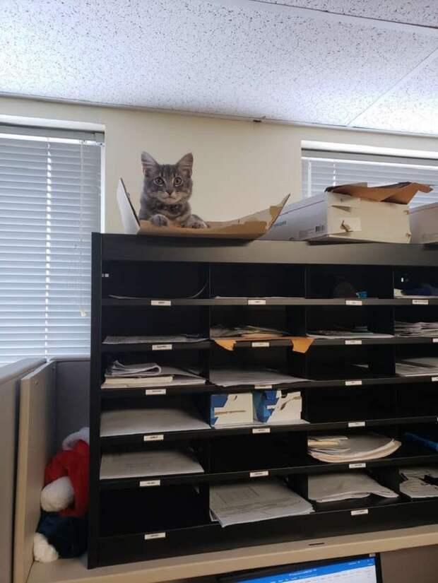 Кошка в папке