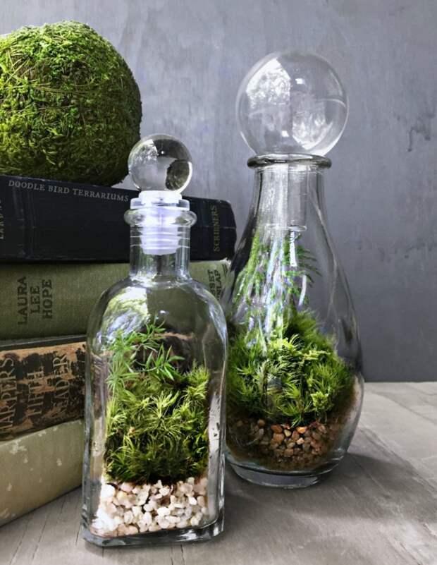 Живой интерьер в доме. Как создать целый лес в квартире? Биологический лайфхак