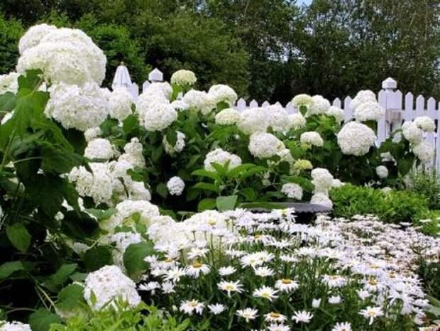 Сад белых цветов