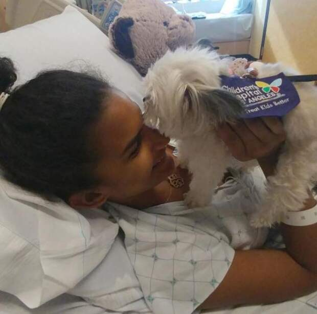Эта крошечная собака работает терапевтом