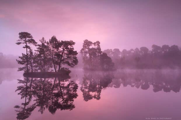 30 фотографий с фиолетовым настроением