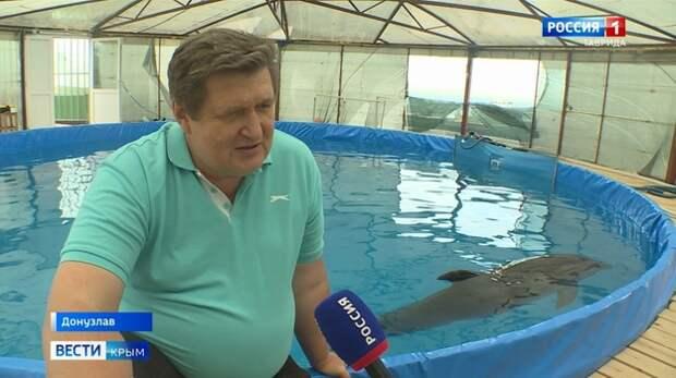 Учёный назвал проблемы у дельфинов в Крыму