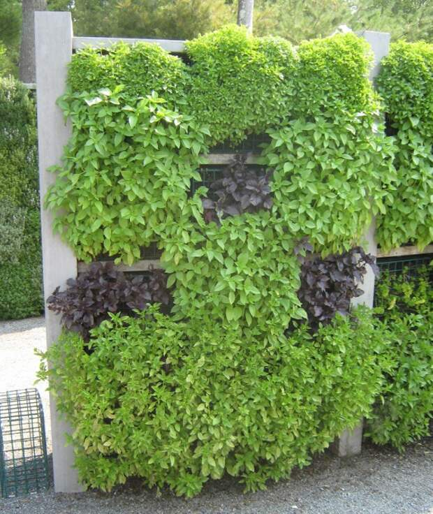 вертикальный сад из трав