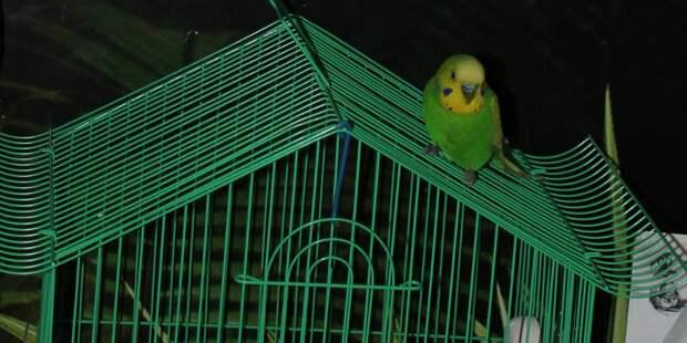 Попугай - фанат мыльных опер