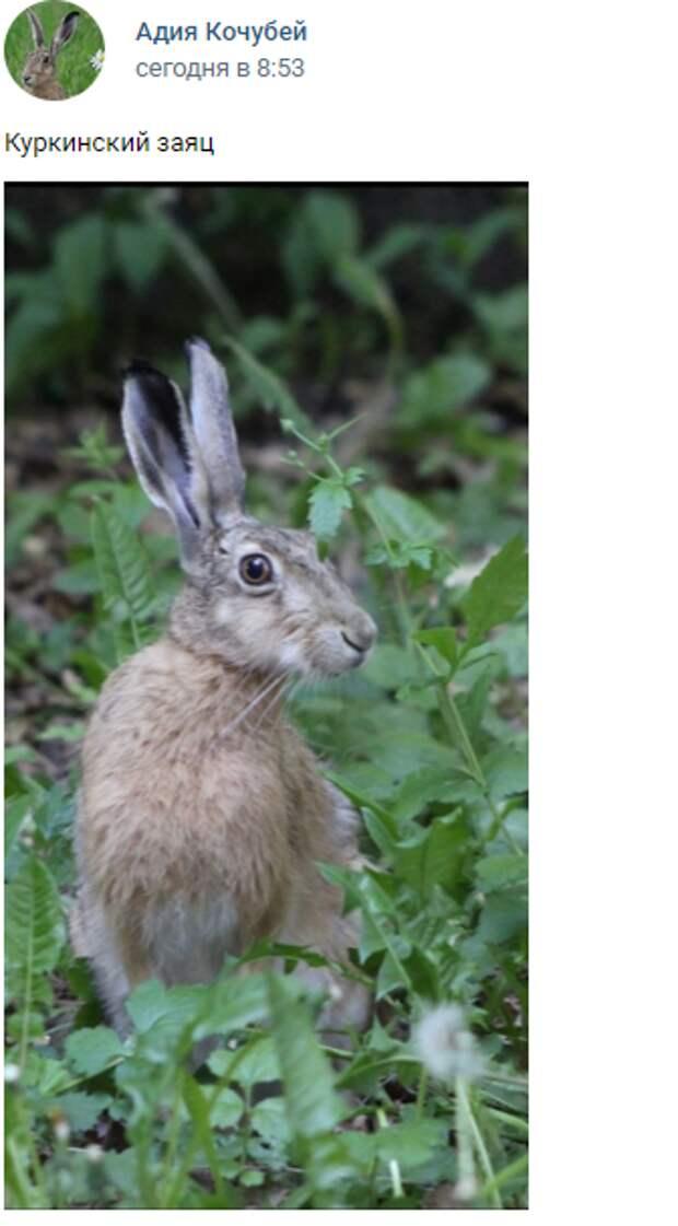 Фото дня: куркинский заяц стал фотомоделью