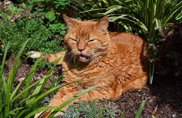 «Помирать пошёл»: старый кот перепугал хозяев, когда заболел и ушёл в лес. А вернулся он уже не один