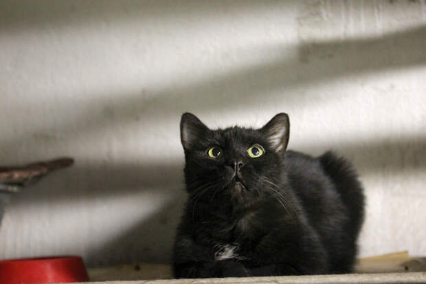 Как сибирские кошки спасли петербургский Эрмитаж
