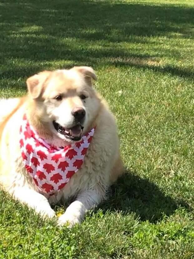 Хозяева хотели усыпить слишком большого пса, но в новой семье ему помогли похудеть и превратили в красавчика