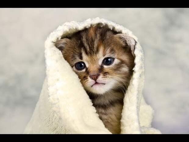 Как купать кота? Делаем процедуру приятной для него и менее травмоопасной для вас!