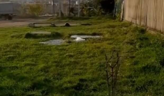 Вставропольском хуторе три дня топит улицу из-за коммунальной аварии