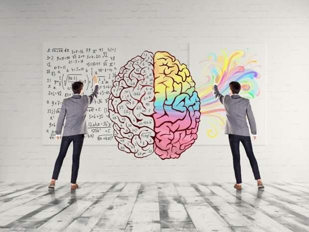 Тест: Определите, какое полушарие мозга у вас работает лучше