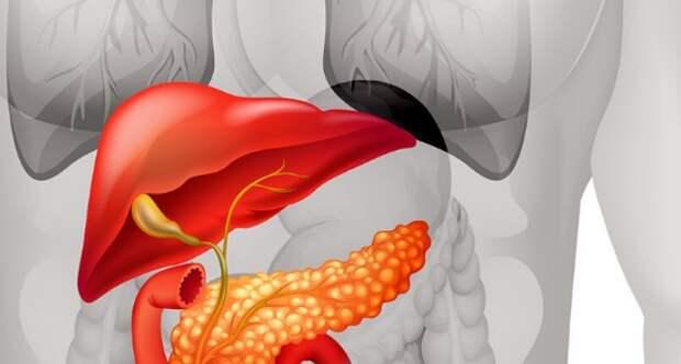 Очищение и лечение поджелудочной железы