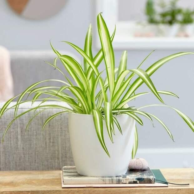 Топ 10 минималистических комнатных растений, которые впишутся в любой интерьер
