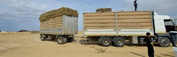 В Мангистау для скотовладельцев завезли 38 тонн сена