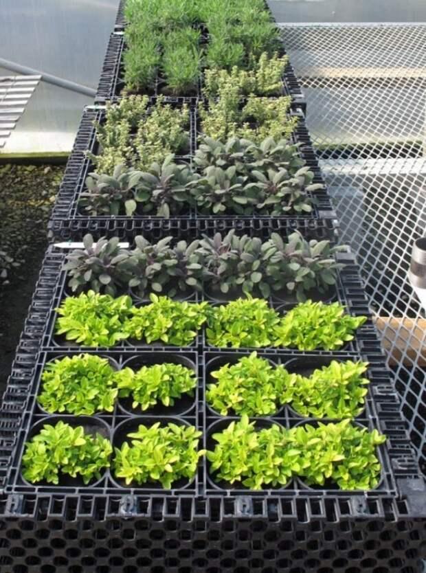 вертикальный травяной сад