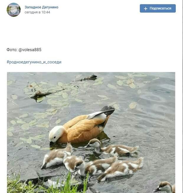 Фото дня: огари в парке «Ангарские пруды»