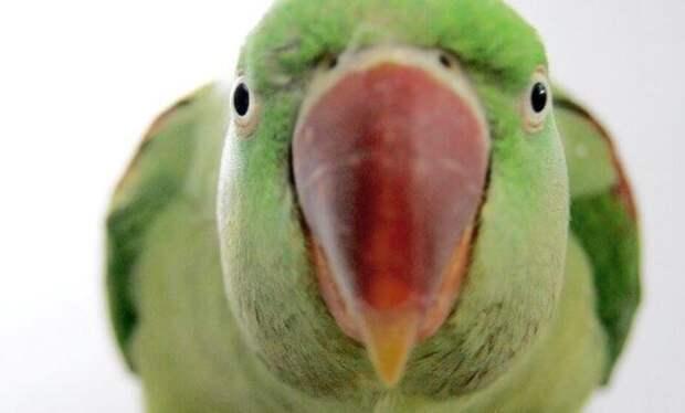 Как попугай спас мне жизнь