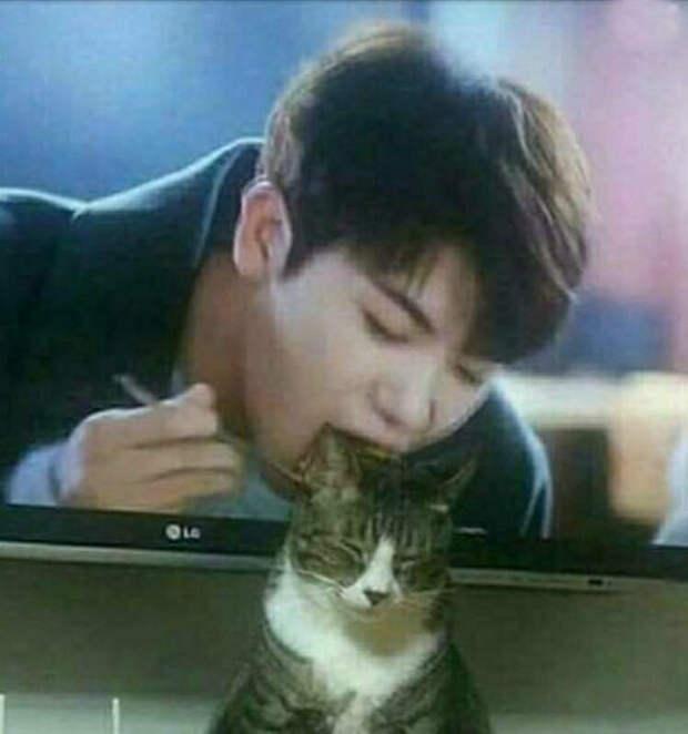 Парень из телевизора вот-вот съест кота.