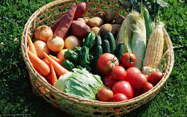 Максимальный урожай любой ценой: советы начинающим садоводам