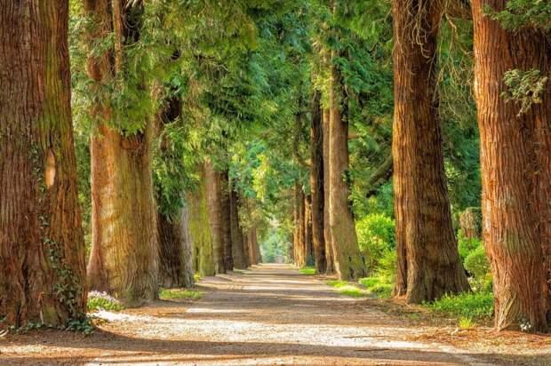 avenue-2215317_1280-1024x682 Деревья благотворно влияют на развитие и психическое здоровье детей