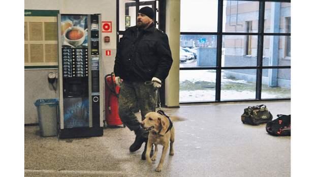 Контрабандисты не пройдут: как работают собаки на границе России