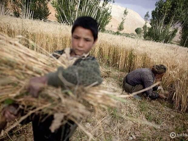 Бамиан: знакомство с афганской культурой