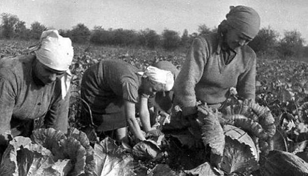 Вся правда о том, что делали советские интеллигенты, когда ездили «на картошку» СССР, интеллигенция, колхоз, студенты, уборка урожая