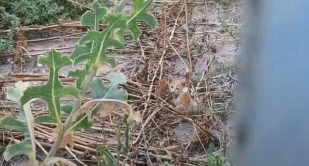 «Любящий хозяин» выбросил своего котенка возле заброшенного дома, прямо в грязь