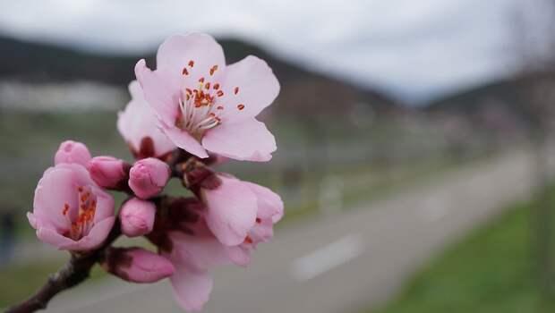 Весна пришла в Крым: сегодня воздух прогреется до 14 градусов