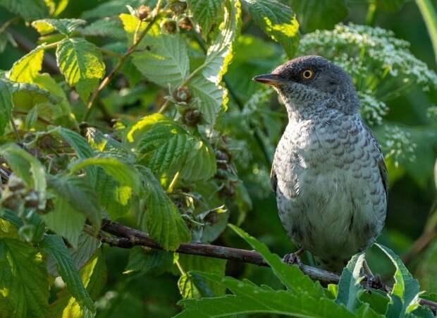 В парке «Северное Тушино» сфоторафировали редкую птицу
