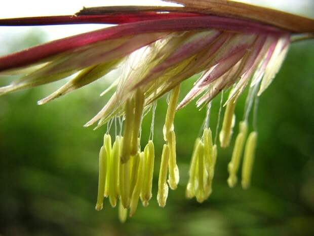 Бамбук: пожалуй, самая удивительная трава на планете