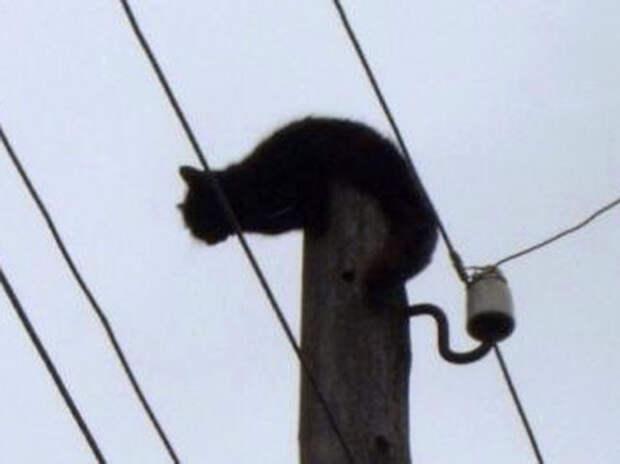 Энергетики спасли мокрую кошку, которая три дня сидела под током