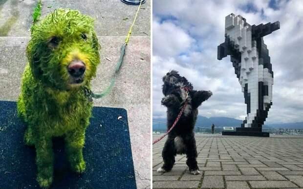 10+ фото собак, над которыми просто невозможно не смеяться