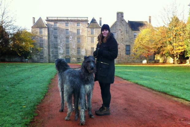 Шотландский Дирхаунд открывает топ самых больших собак