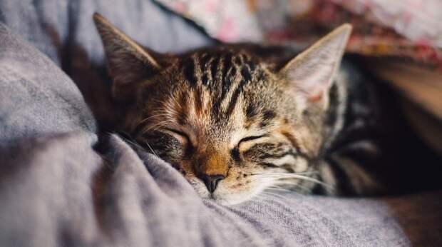 Как помочь коту привыкнуть к новому дому