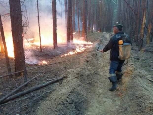 В Челябинской области огонь уничтожил пять гектаров леса